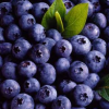 Blueberries: Benefits and Properties